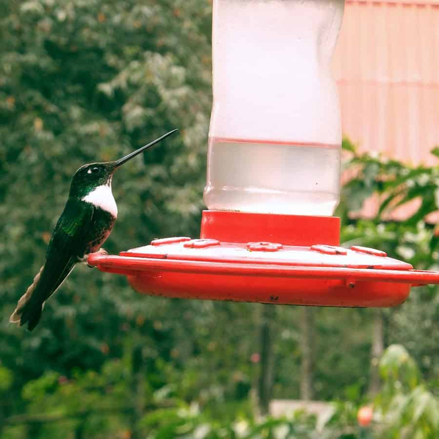 cloudy hummingbird nectar