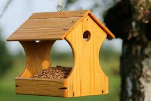 How High Should a Bird Feeder Be Off the Ground?