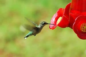 What Time of Day Do Hummingbirds Feed?