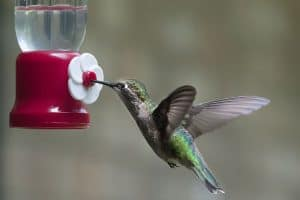How to Make Hummingbird Nectar Without Boiling the Water