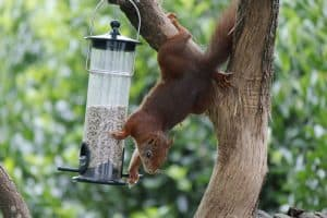 How to Keep Squirrels Out of Bird Feeders - 5 Methods