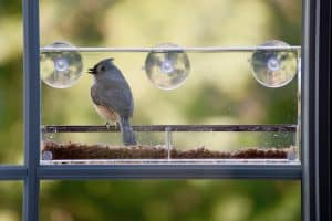 How to Attract Birds to a Window Feeder