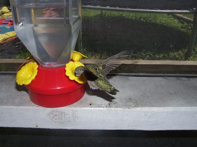feeder with yellow on it