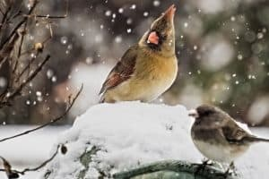 How do Birds Survive in the Winter?