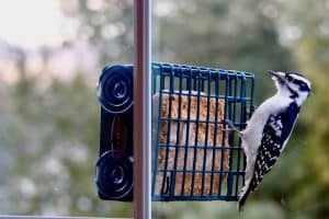 Best Bird Feeders for Apartments and Condos