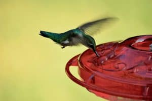 How Often Should I Clean My Hummingbird Feeder?