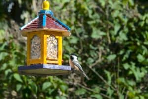 What Color Bird Feeder Attracts the Most Birds?
