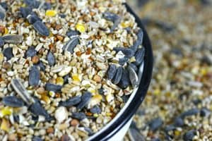 Backyard Bird Seed Guide - Nutritional Info and Where to Buy
