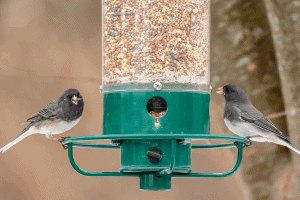 How Do Birds Know There is a Bird Feeder?