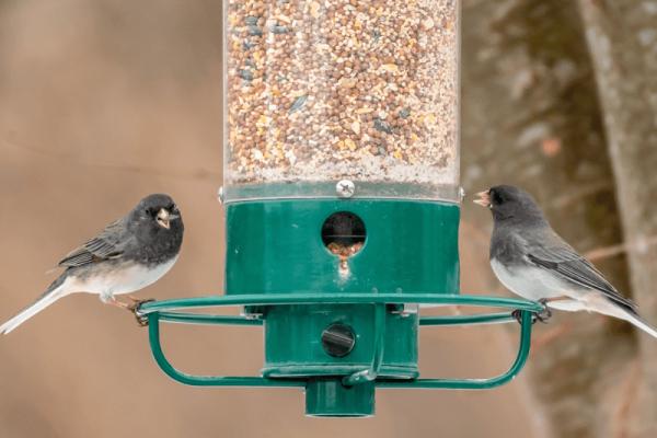 Best Large Capacity Bird Feeders (8 Options)