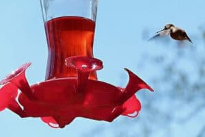 Here's Why Red Food Coloring May Be Harmful to Hummingbirds