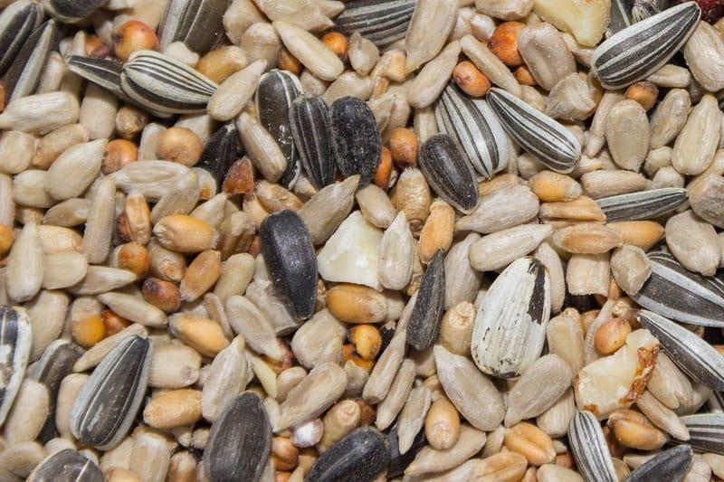 multiple types of bird seed