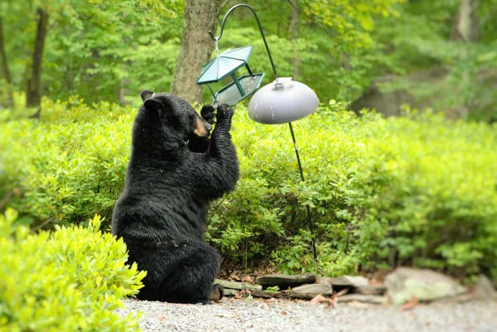 bear at a bird feeder