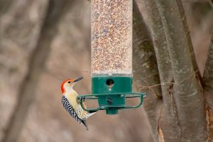 How to Save Money (and Time) Buying Bird Seed