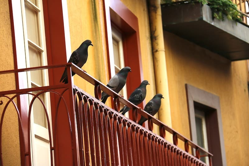 How to Keep Birds Away from Patios, Decks, and Balconies