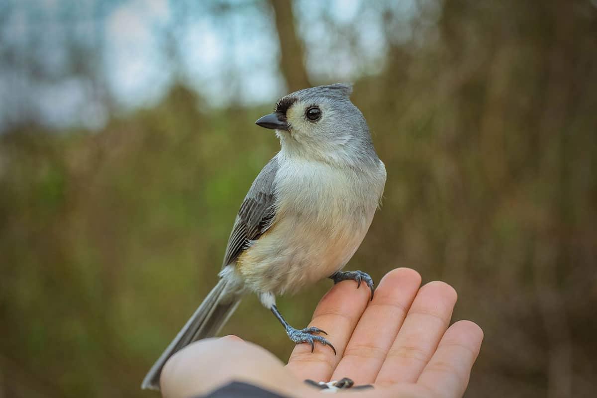 wild bird in persons hand