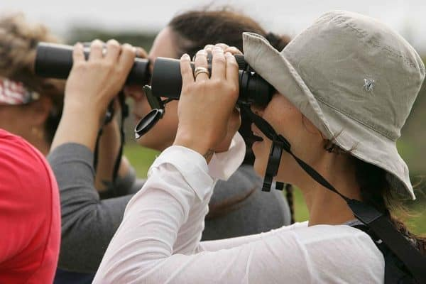 Birdwatching for Beginners: A Complete Guide