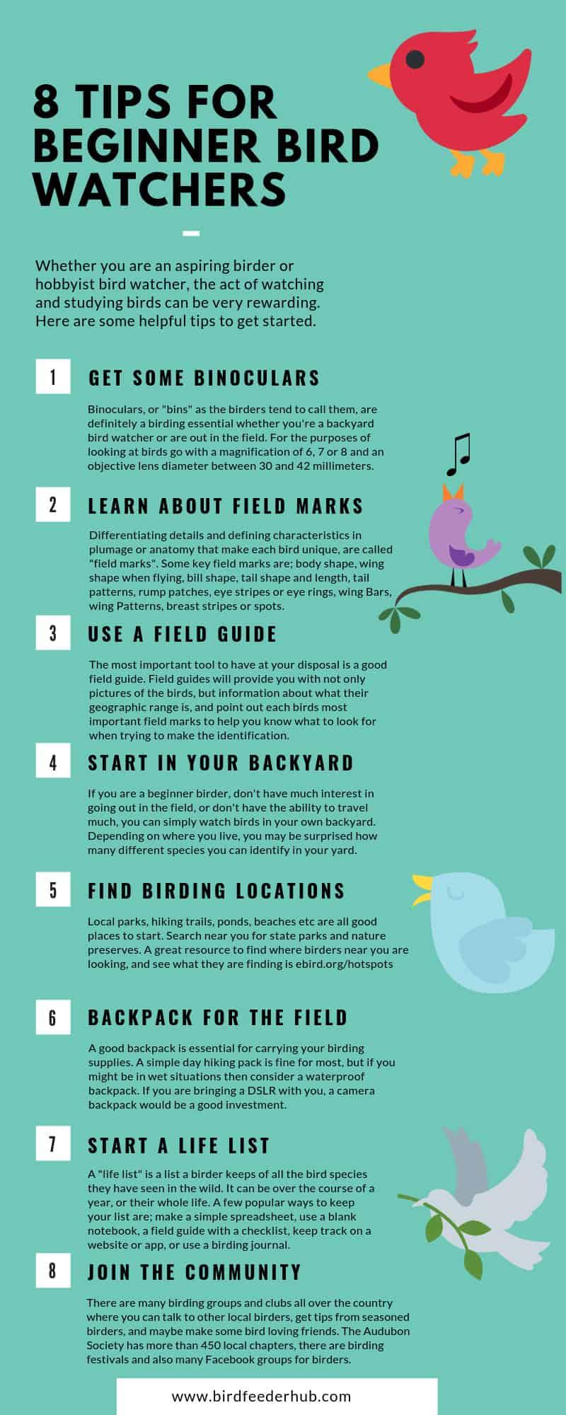 bird watching tips infographic