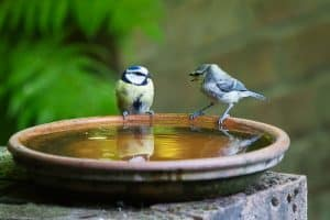 How to Provide Water for Birds in Summer
