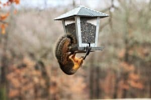 The Best Squirrel Proof Bird Feeders (That Actually Work)