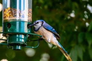 The Best Bird Feeders For Your Backyard (In 2021)
