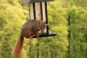 Most Common Bird Feeder Pests