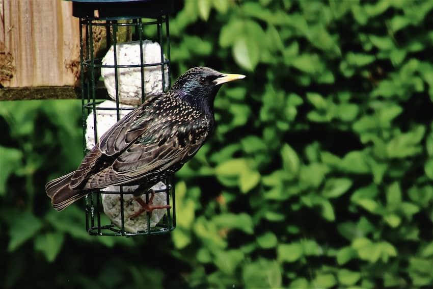 4 Simple Tips to Get Rid of Bully Birds Crowding Your Feeders