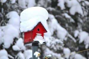 Do Birds Use Birdhouses in the Winter?