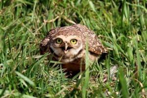 The 13 Species of Owls in Colorado