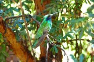 Hummingbird Facts, Myths, and FAQ