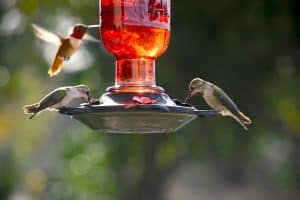 Where To Hang A Hummingbird Feeder - 4 Simple Ideas