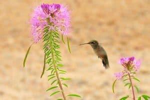 5 Hummingbirds in Illinois (Common & Rare)