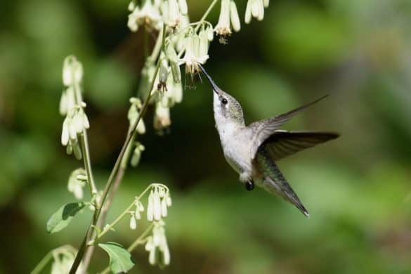 How to Attract Hummingbirds To Your Yard (10 Simple Tips)