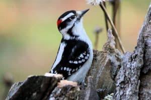 Backyard Birds In West Virginia (27 Species with Pictures)