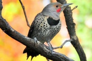 Backyard Birds In Colorado (28 Species with Pictures)