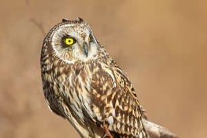 6 Species of Owls in North Carolina (With Pictures)
