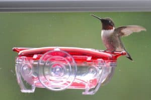 Top 5 Best Hummingbird Feeders For Your Yard This Season