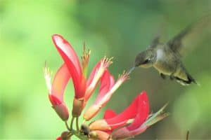 20 Plants and Flowers That Attract Hummingbirds