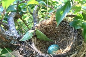 Why Birds Abandon Their Nests With Eggs - 4 Common Reasons
