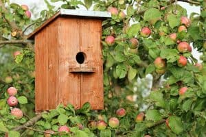 When To Clean Out Bird Houses Each Year (And When Not To)