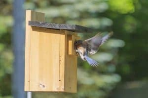 25 Backyard Birds in North Carolina (Pictures, Facts)