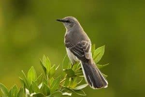 Backyard Birds In Arkansas (27 Species with Pictures)