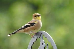 24 Backyard Birds in New Jersey (Pictures & Facts)