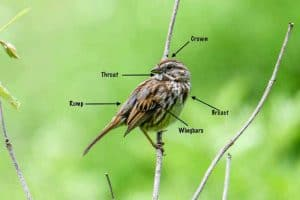 How To Identify Birds (5 Main Factors to Consider)