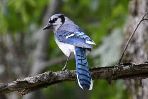 27 Backyard Birds in New Hampshire (With Pictures)