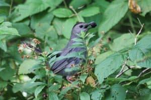 Backyard Birds In Nebraska (26 Species with Pictures)