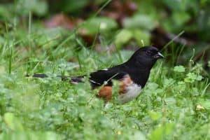 Backyard Birds In Delaware (24 Species with Pictures)