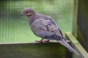 Backyard Birds in New York (26 Species with Pictures)