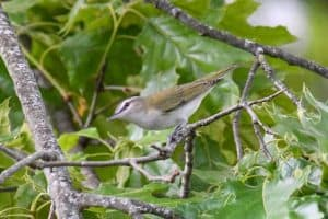 Backyard Birds In Maryland (26 Species with Pictures)