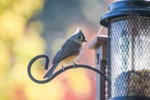 26 Backyard Birds in Vermont (With Pictures)